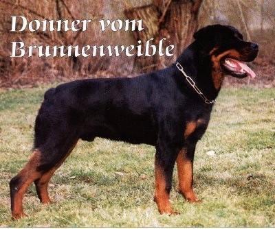 donner_vom_brunnenweible