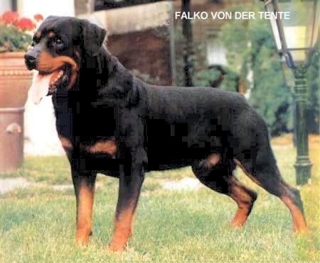 falko_von_der_tente