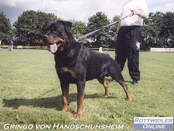 gringo_von_handschuhsheim