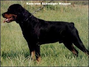 karo_vom_schwaiger_wappen