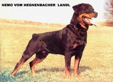 nemo_vom_hegnenbacher_landl