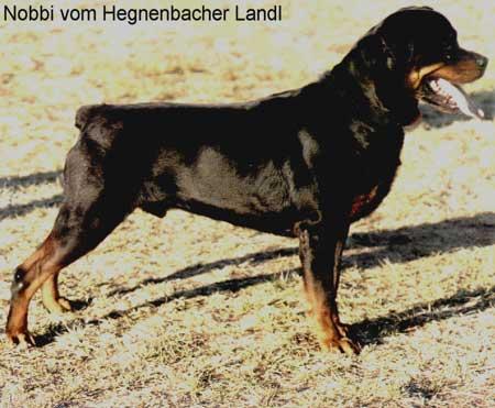 nobbi_vom_hegnebacher_landl
